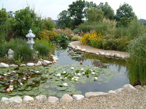 Jardin bassin for Liner pour bassin a poisson