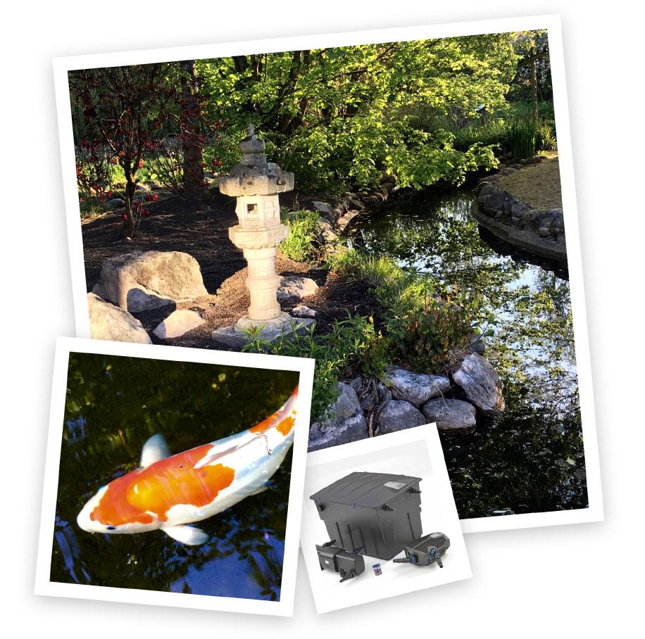 Les Jardins Du Moulin Paysagiste services & prestations - les jardins aquatiques