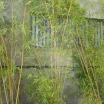 Remise exceptionnelle de 50 % sur TOUS les bambous