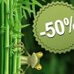 Incroyable !!!! - 50 % sur tous les bambous