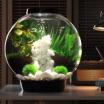 Les Aquariums Biorb sont arrivés !