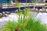 Le printemps nous sourit enfin, profitez-en pour faire vos plantations !