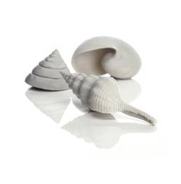 Décor Aquarium BIORB Set de 3 Coquillages Blancs