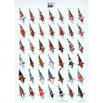 Poster Koï plastifié A4 nr 1